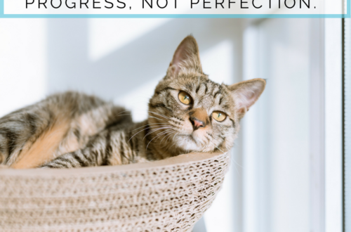 The Beginner's Guide to Zero-Waste Pet Care: Progress Not Perfection