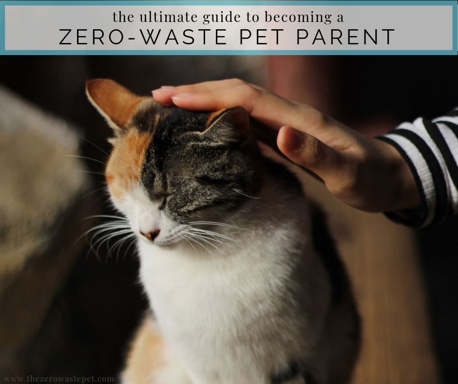 Becoming a Zero-Waste Pet Parent_ Everything you need to know to lessen your impact on the planet