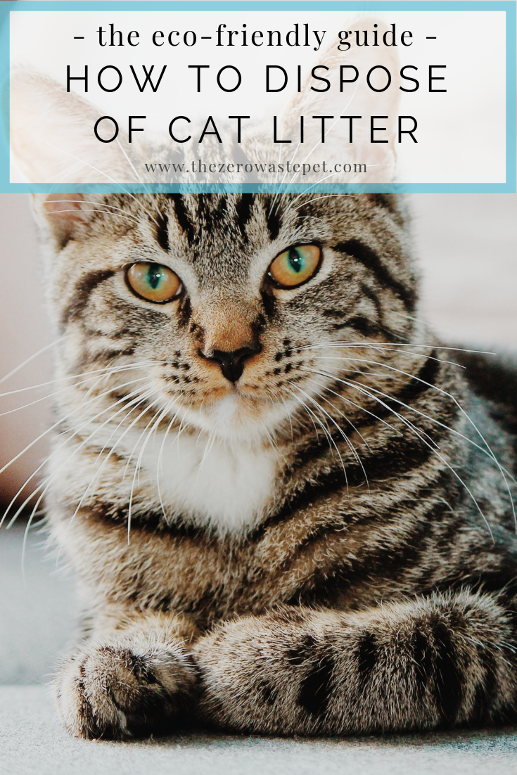How to Dispose of Cat Litter_ The Ultimate Guide to Eco-Friendly Pet Waste Management (Part 1)