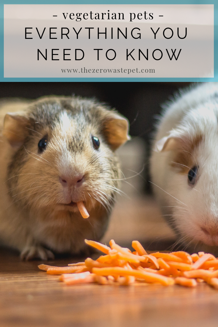 The top 7 vegetarian pets: Everything you need to know about caring for an eco-friendly pet!