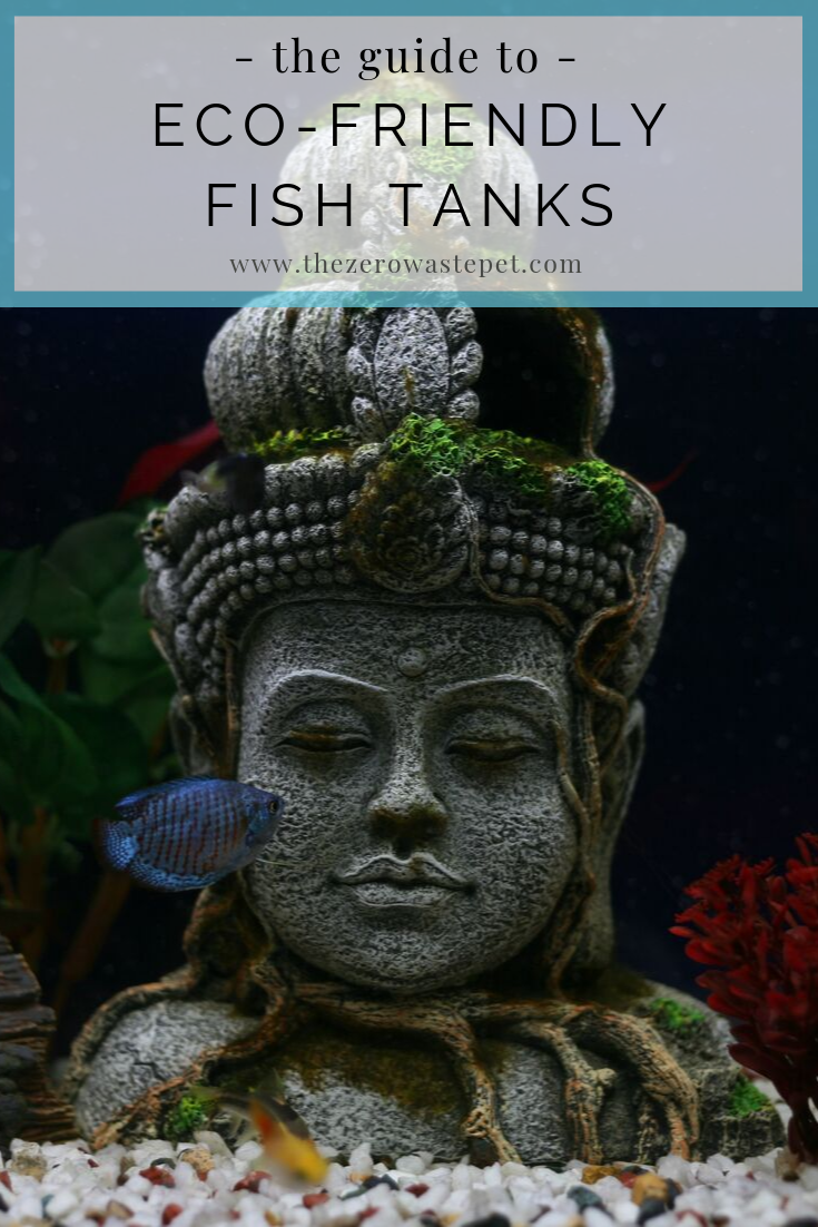 Can keeping pet fish be eco-friendly? Find out everything you need to know to operate an eco-friendly fish tank in your home!